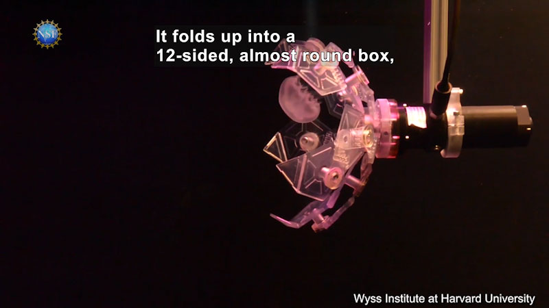A new device that helps capture and release soft bodied animals. On screen text, Wyss Institute at Harvard University. Caption: It folds up into a 12 sided, almost round box,