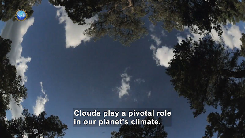 A 360 view of the clouds and the tree tops. Caption: Clouds play a pivotal role in our planet's climate,
