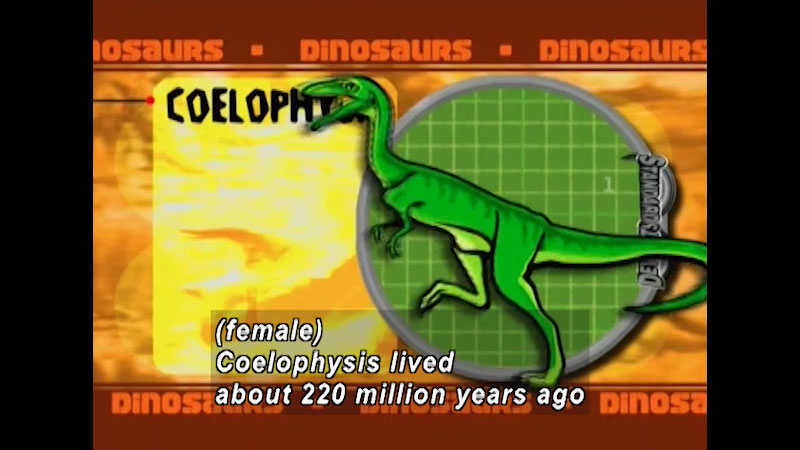 illustration of Coelophysis. On screen text, dinosaurs. Caption: Female, Coelophysis lived about 220 million years ago.