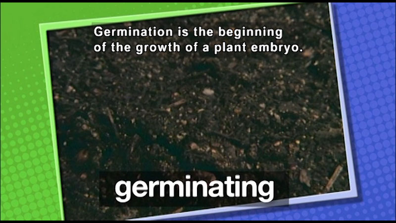 A photograph of plant soil. On screen text, germinating. Caption: Germination is the beginning of the growth of a plant embryo.