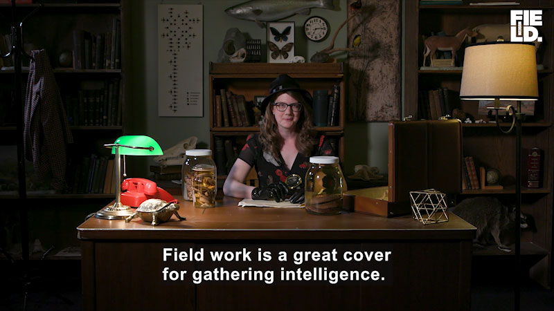 Emily Graslie is seated at her desk with the table lamps on. Caption: Field work is a great cover for gathering intelligence.
