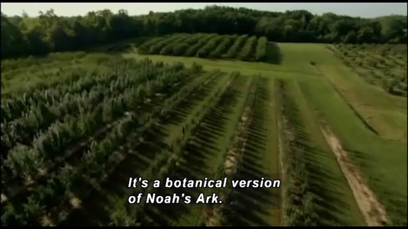 A vast agricultural land with varieties of plants laid in strips. Caption: It's a botanical version of Noah's Ark.