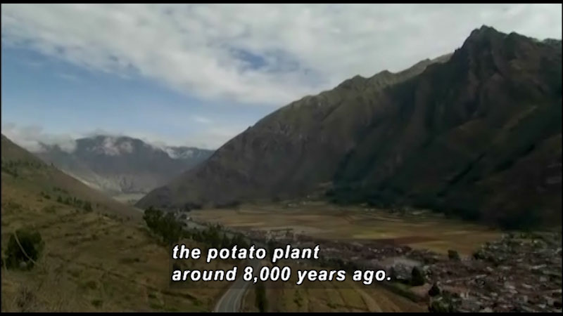 A hamlet in a Peruvian Valley. Caption: the potato plant around 8,000 years ago.