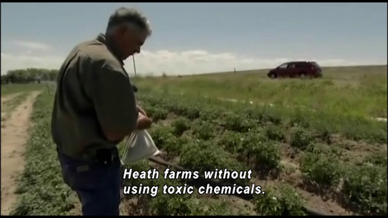 A farmer carries a small pouch in his field. Caption: Heath farms without using toxic chemicals.