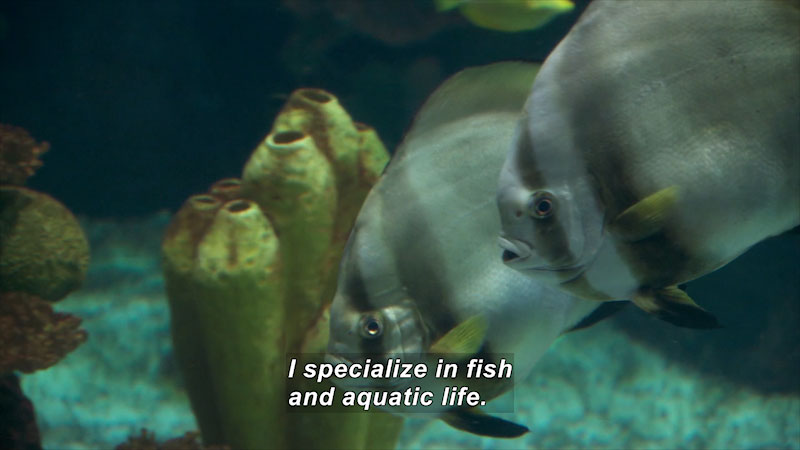 Two fish swim underwater through underwater plant life. Caption: I specialize in fish and aquatic life.