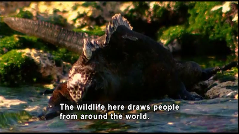 A reptile in the wilderness. Caption: The wildlife here draws people from around the world.