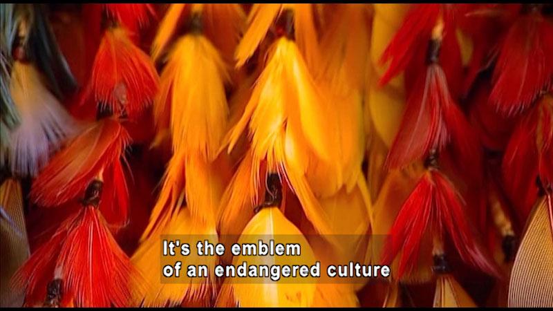 Still image from: Around the World: South America--Umahara Headdress