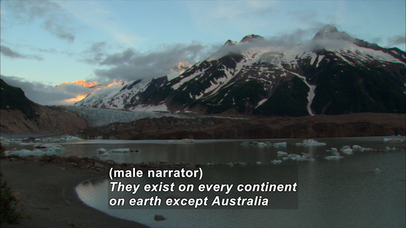A mountain covered in snow. Caption: (male narrator) They exist on every continent on earth except Australia.