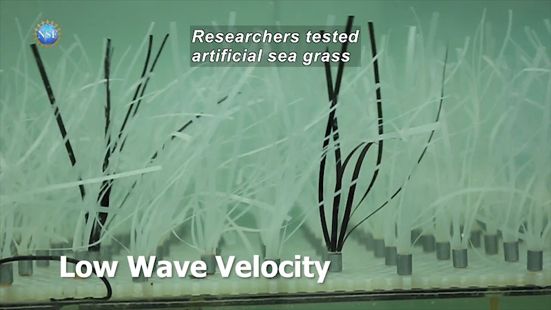 Artificial sea grass on low wave velocity. Caption: researchers tested artificial seagrass.