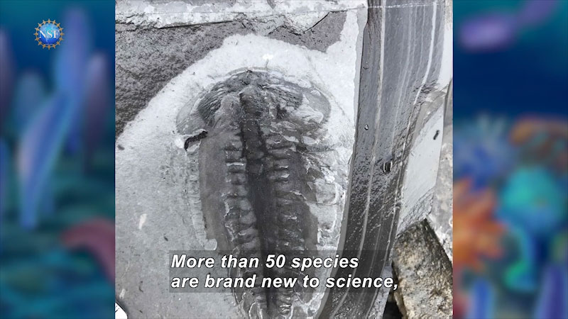 A fossil in a rock.`Caption: More than 50 species are brand new to science,