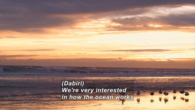 A beach. Caption: (Dabiri) we're very interested in how the ocean works.