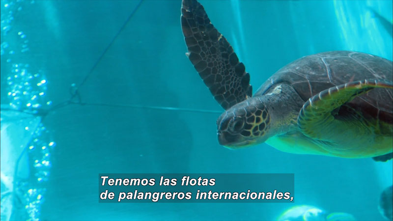 Still image from Turtle World: The Arrival of the Turtle (Spanish)