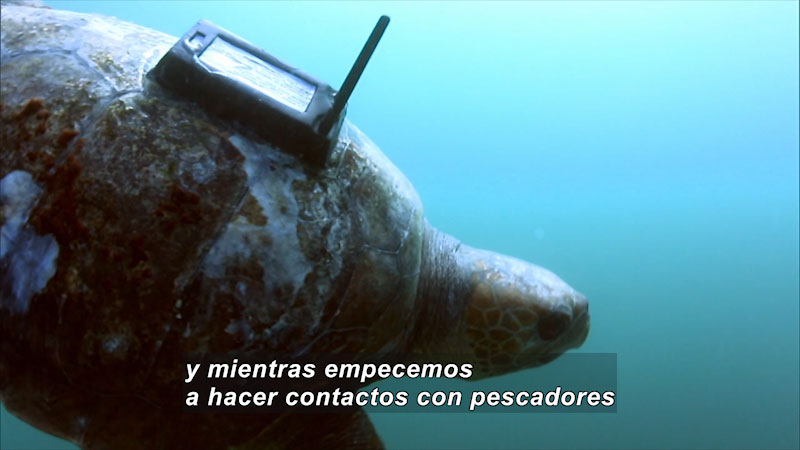 Still image from Turtle World: Tortugueros (Spanish)