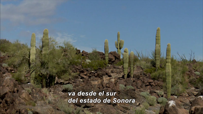 Still image from Bios: Nature and Society--Where Life Flourishes, Great Desert of Altar (Spanish)