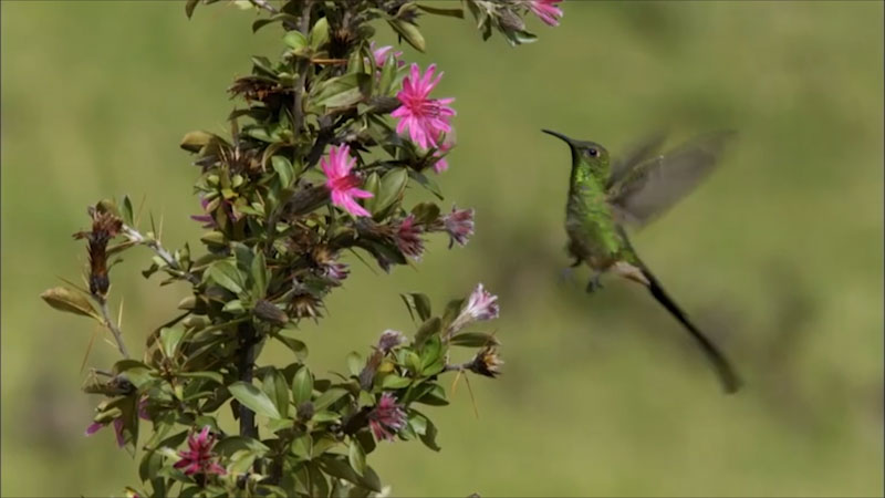 A hummingbird hovering around a plant.
