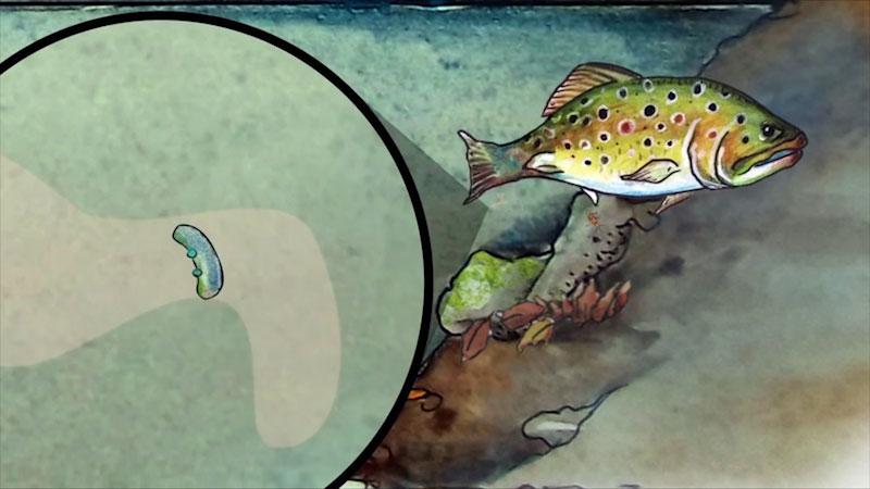 A diagram illustrates a fish.