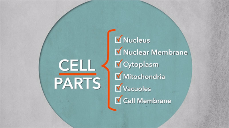 A diagram shows six cell parts. Nucleus, Nuclear Membrane, Cytoplasm, Mitochondria, Vacuoles, and cell membrane.