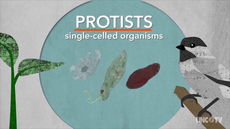 Protists, single celled organisms.