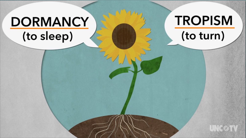 A sunflower is labeled, Dormancy, to sleep, and, Tropism, to turn.