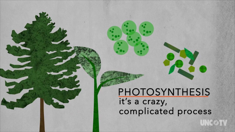 Photosynthesis, it's a crazy, complicated process.