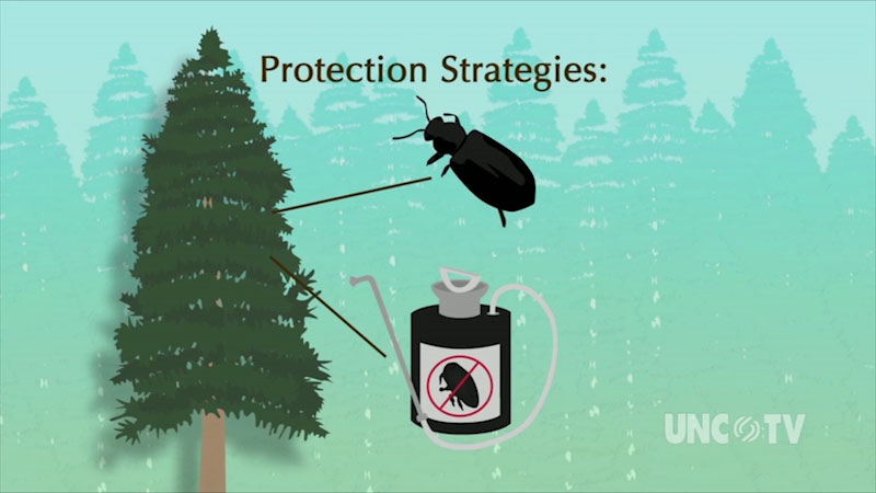 A diagram of an infected tree treated with a pesticide is labeled, protection strategies.