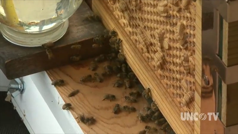 Photo of bees near an artificial beehive.