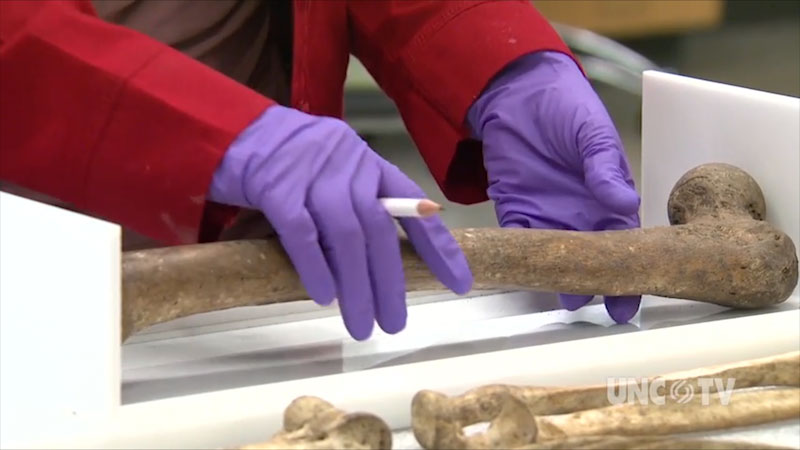 A skeletal bone is being placed on a table.