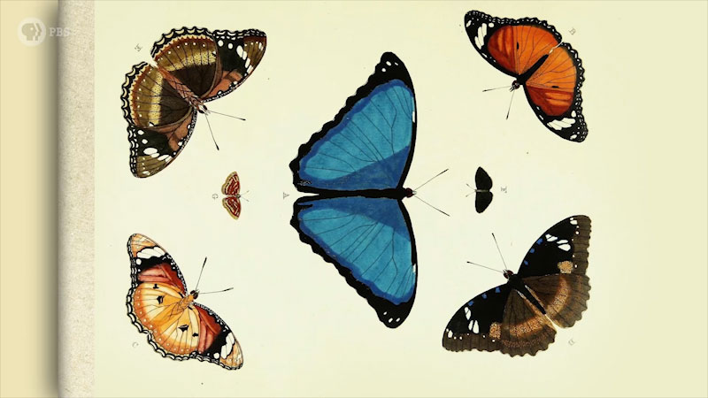 Seven different butterflies, where four are placed at the corners facing the butterfly at the center and two at either side of the central butterfly.