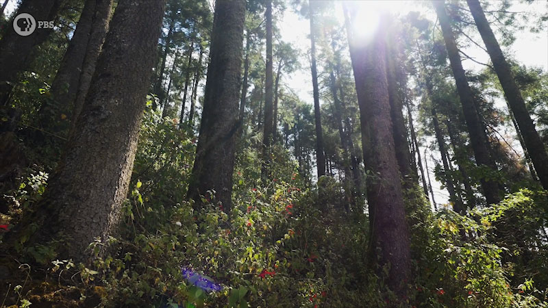 Sunlight is shining through in a forest with large number of trees.
