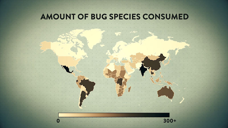 A world map illustrates the amount of bug species consumed, on a scale from 0 to 300 plus.