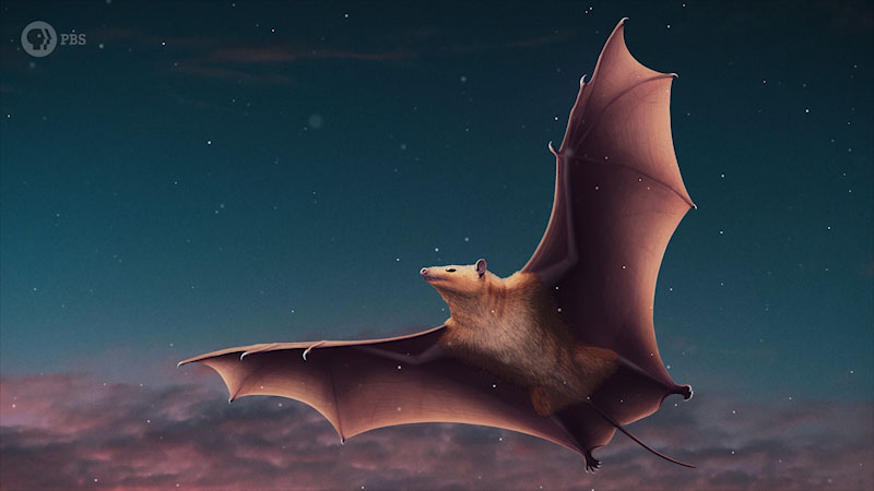An illustration depicts a bat flying in sky.