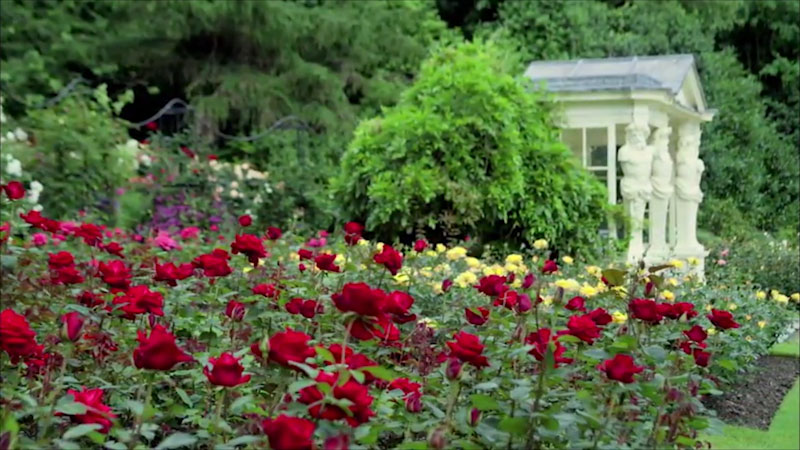 A photo of the rose garden in the backyard of Buckingham palace.