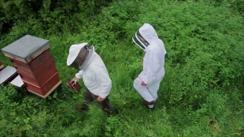 A beekeeper and a scientist fully geared in protective suits move toward a bee rearing station.