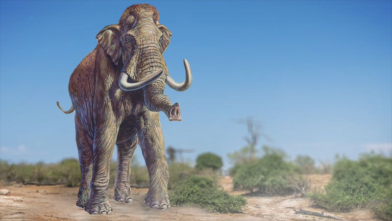 An illustration of a male Woolly mammoth.