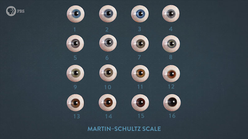 Sixteen eyeballs, each with different eye color. Caption: Martin-Schultz scale.