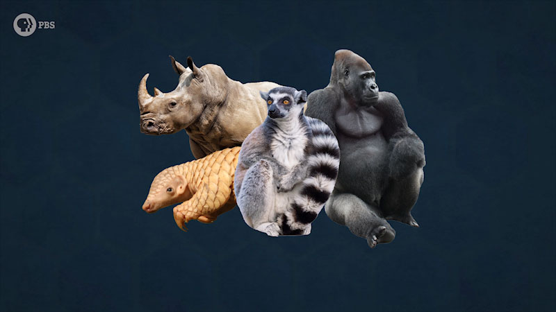 A group of animals, a gorilla, a rhino, a lemur cat, and a scaled lizard.