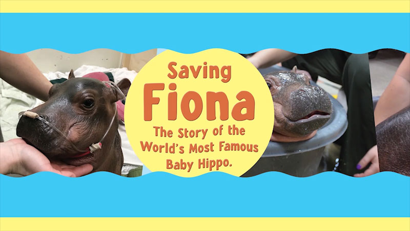 Still image from: Saving Fiona: The Story of the World's Most Famous Baby Hippo