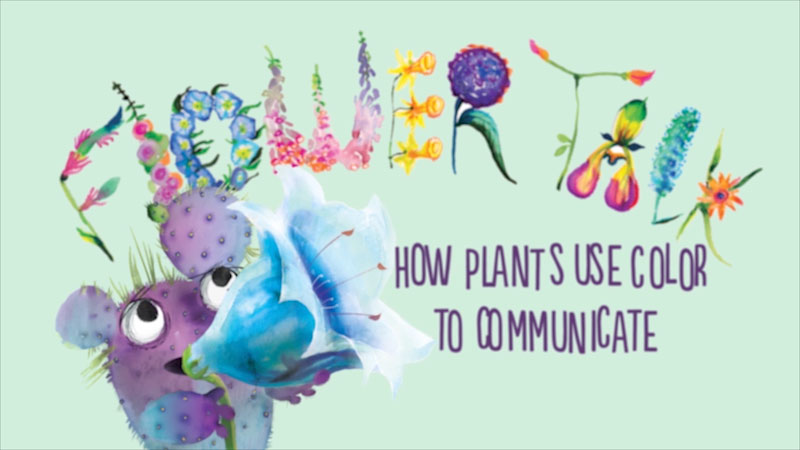 Still image from: Flower Talk: How Plants Use Color to Communicate