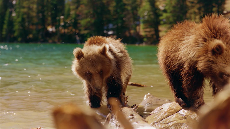 Still image from Journey With Dylan Dreyer: Bears