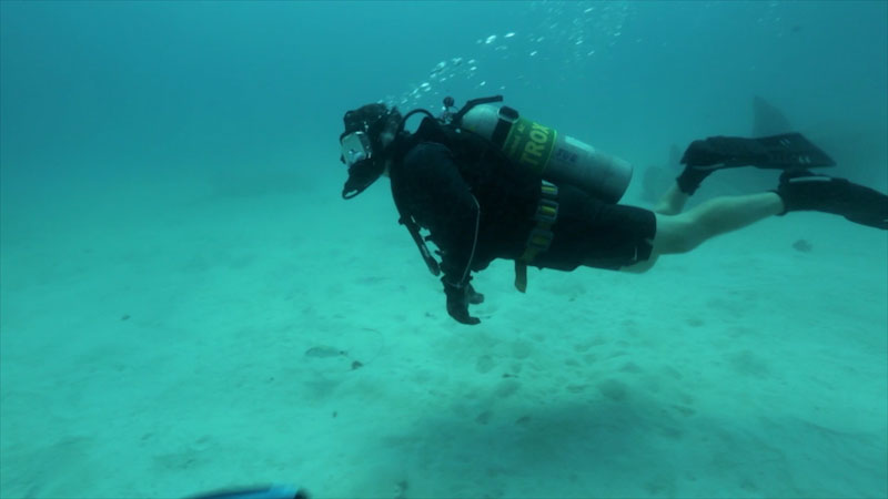 A person diving underwater.
