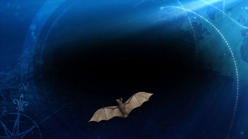 A bat flying in the sky.