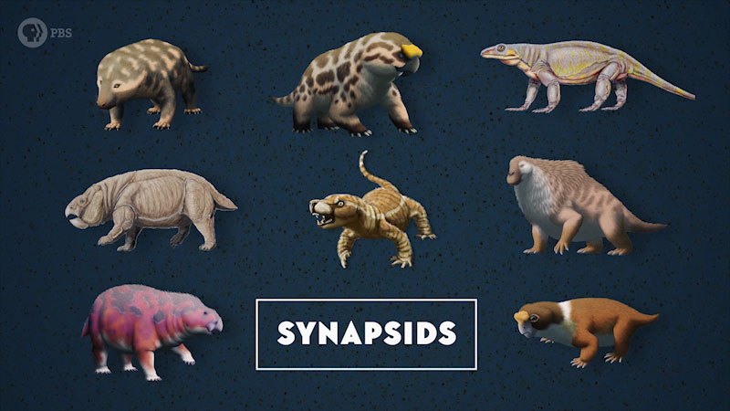 A group of four legged terrestrial creatures. Caption: Synapsids.