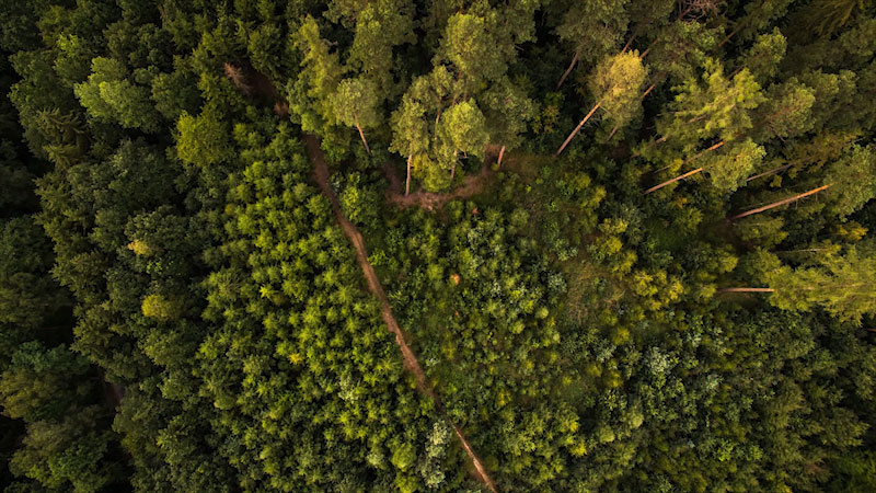 An aerial view of a canopy of trees.