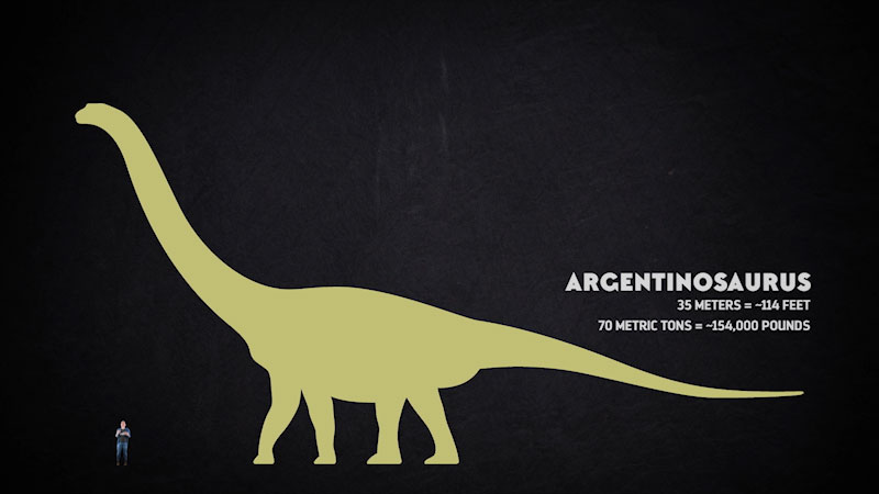 A sketch of a dinosaur, and a man is seen standing below. Caption: Argentinosaurus, 35 meters approximately equals 114 feet. 70 metric tons approximately equals 154,000 pounds.