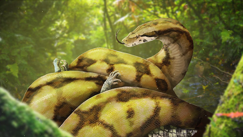 A cartoon shows a large python wrapping its body and squeezing a small crocodile.