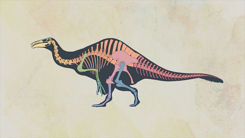 A cartoon shows the skeletal structure of a giant dinosaur.