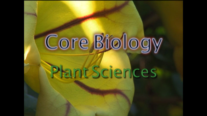 Still image from: Core Biology: Plant Sciences