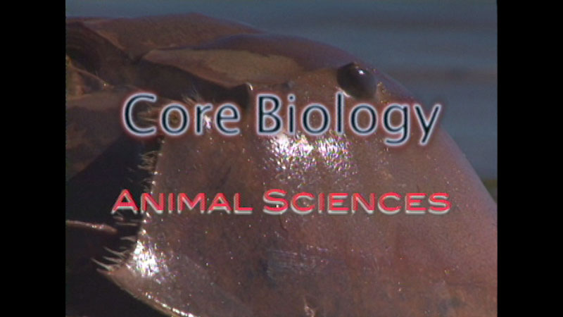 Still image from: Core Biology: Animal Sciences
