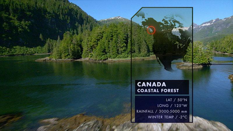 A stream flows through a mountainous region. Caption: Canada Coastal Forest. Latitude, 50 degrees North. Longitude, 125 degrees West. Rainfall, 3000 to 5000 millimeters. Winter Temperature, minus 2 degrees Celsius.