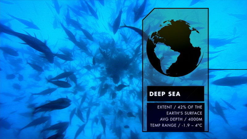 A large number of fishes are swimming in the deep sea. Caption: Deep Sea. Extent, 42% of the earth's surface. Average depth, 4000 meters. Temperature range, minus 1.9 to 4 degrees Celsius.